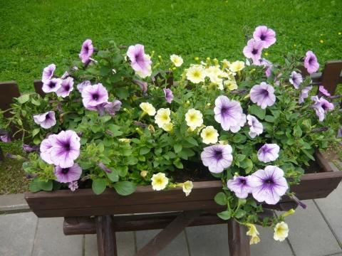 Цветы!!! - Городские цветы