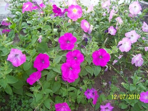 Такие яркие, такие нежные - Городские цветы