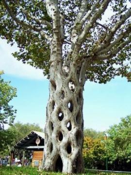 дырчатое дерево - Ангелина Васильевна Мельникоvа