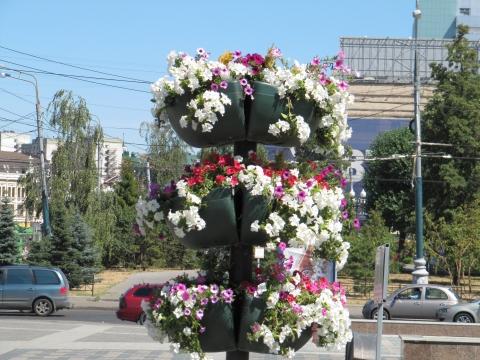 Петунии - Городские цветы