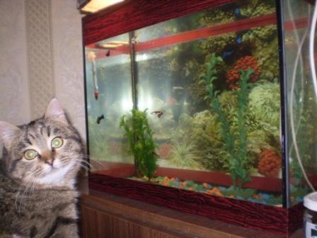 Рыбалку любит Вася наш - домашние животные