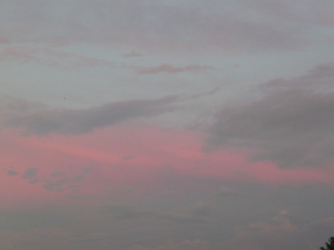Небо над Петербургом - Александра Николаевна Литвинова
