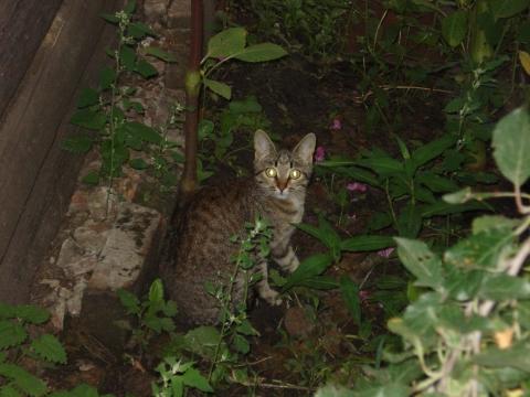 Моя кошка - Динка
