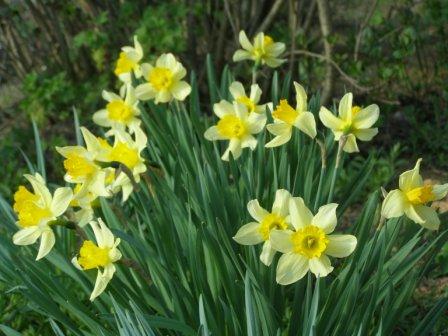Весенные цветы - Городские цветы