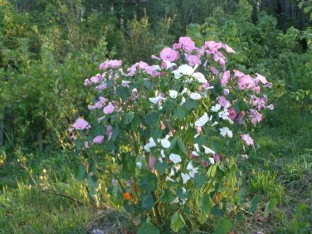 В саду - Городские цветы