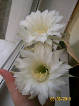 Нежность - Городские цветы