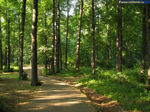 Ко Дню города, который в этом году будет отмечаться 3 сентября, в Москве отремонтируют 30 парков, сообщил в четверг...