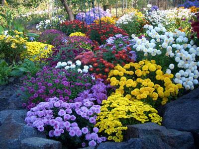 краски лета - Городские цветы