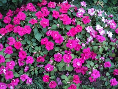 Без названия - Городские цветы