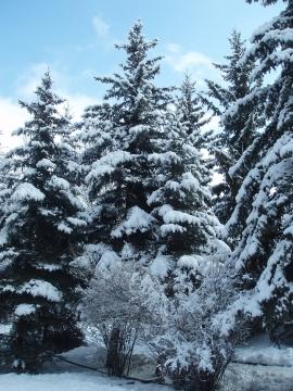 Зимний лес - Фото клуб