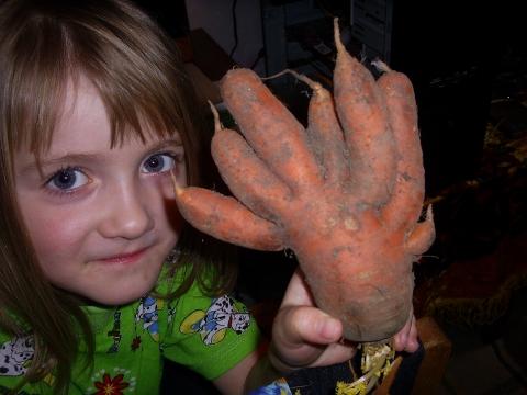 Морковь- мутант - Фото клуб