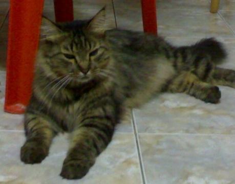 Котик - Фото сообщество