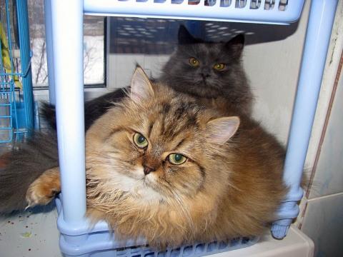 Кошечки-подружки - Фото клуб