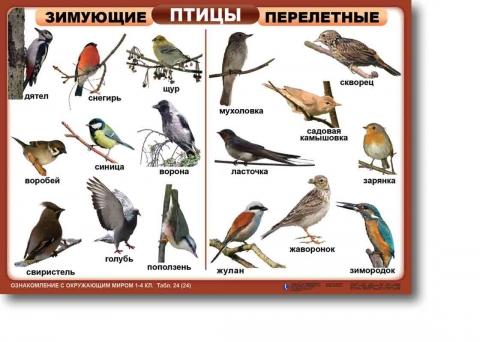 перелётные птицы украины картинки