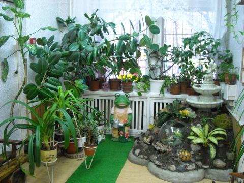 Зимний сад в детском саду фото своими руками