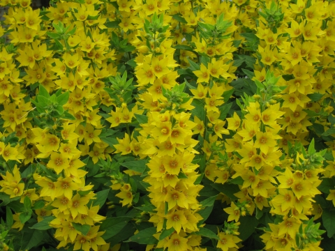 Желтенькие - Городские цветы