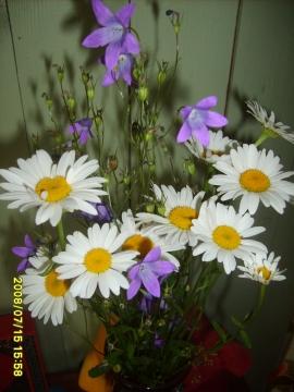 Любимые цветы моей мамы - Елена Анатольевна Кондратьева