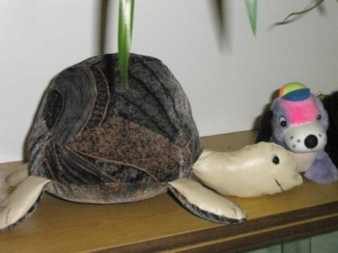 Черепаха - Средняя общеобразовательная школа 557 www.spb-school557.ru