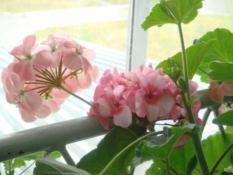 Цветы на втором этаже - Татьяна Николаевна Архипова