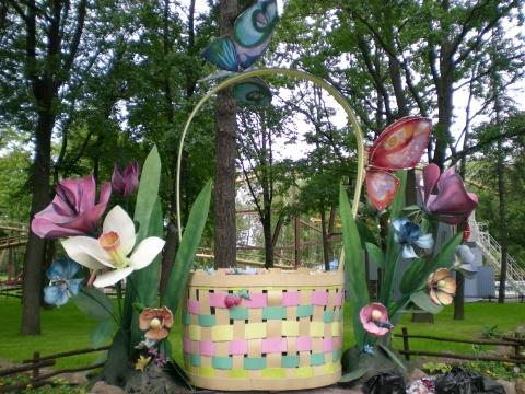 Цветы - Городские цветы