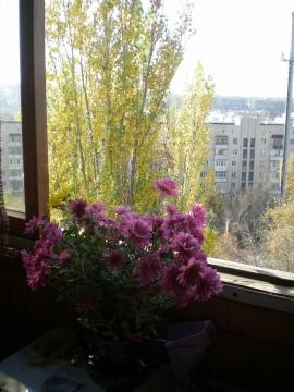 Цветы в городе - Городские цветы
