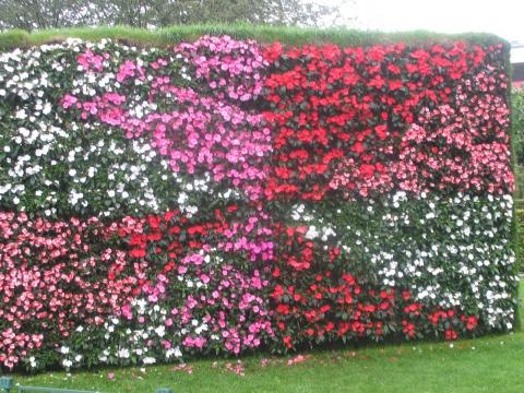 в Бергене - Городские цветы