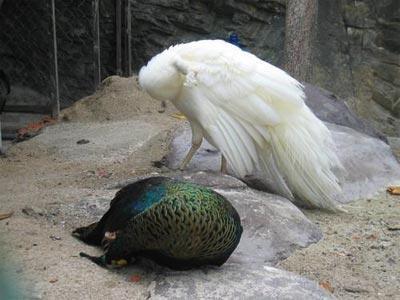 Белый попугай - Вера Владимировна Пырьева