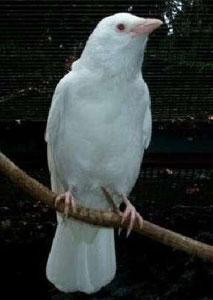 Белая ворона - Вера Владимировна Пырьева