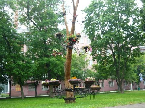 Дерево ожило! - Городские цветы