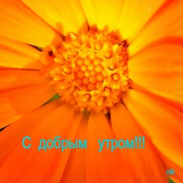 С добрым утром! - Надежда Ивановна Курдюмова