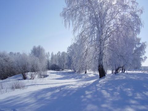Зима. Север Омской области. - Оксана Олеговна Дыльченко