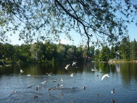 Озеро - Александра Николаевна Литвинова