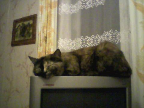 Мураша - Ирина Валентиновна Ермакова