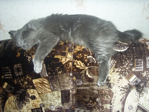 Мурка спит.Она устала... - Юлия Анатольевна Акмазикова