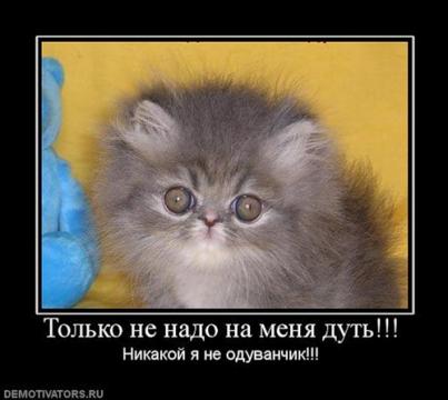 котик - Ирина Дмитриевна Гаврилова