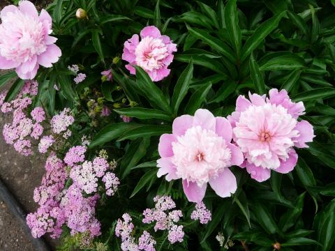 На одной клумбе - Городские цветы