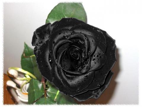 Как сделать розу чёрной 527