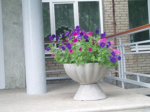Петуния у школы - Ольга Константиновна Филиппова