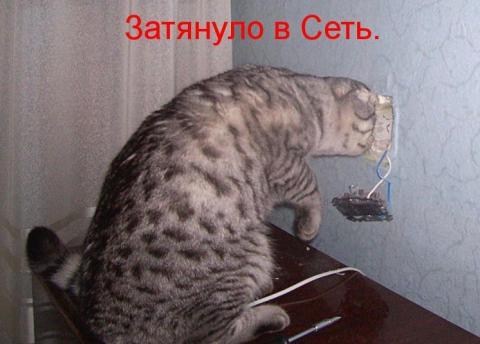 кот в сети - Ирина Дмитриевна Гаврилова