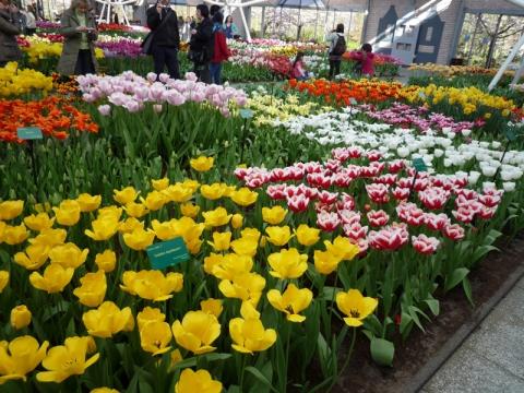 цветочный ковер - Городские цветы