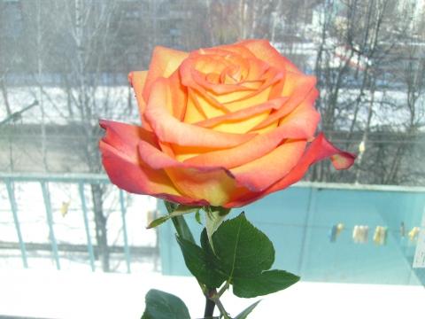Настроение - Городские цветы