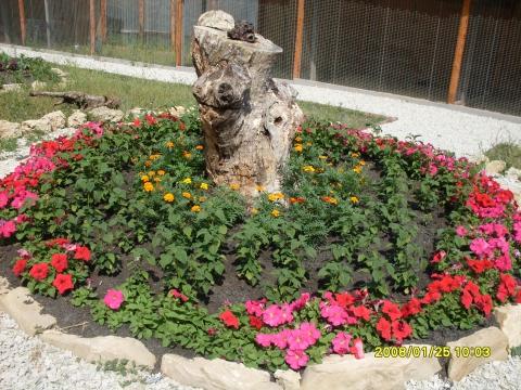Клумбы Анапы - Городские цветы
