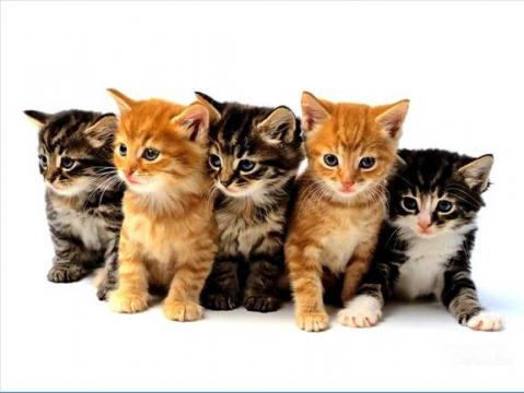 Фото котят: милые котята и котики.