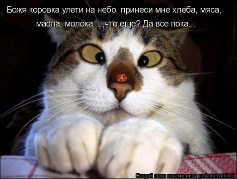 кот - Ирина Дмитриевна Гаврилова