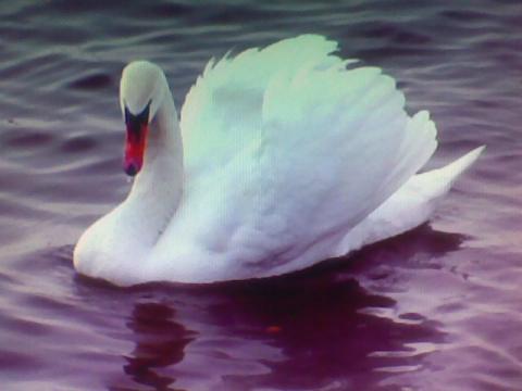 Лебеди как облака.... - Александр Николаевич Комлев