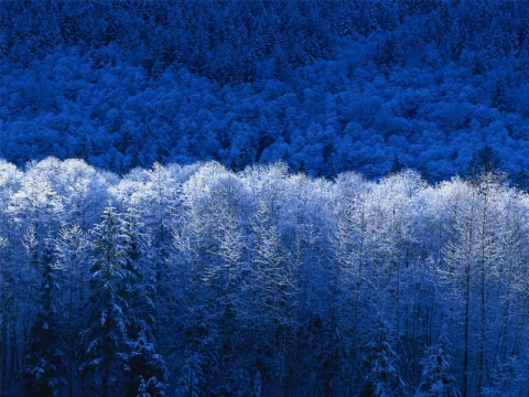 зима - Надежда Геннадьевна Куклина
