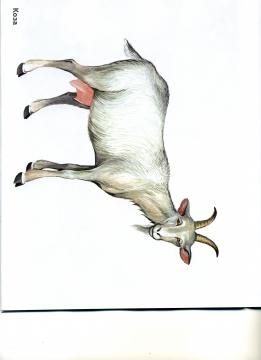 Картинка юлька коза