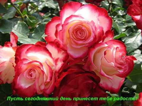 С праздником! - Оксана Николаевна Габдрахманова