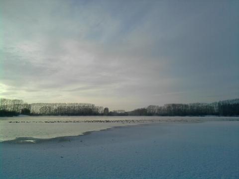 Лебединное озеро в с. Урожайное Алтайского края - Ольга Евгеньевна Коваленко
