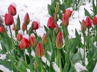 Весна... зимой. - Владимир Николаевич Моисеев
